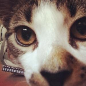 Alfie - hates chickens, loves selfies!