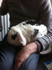 Sophie - a rabbit Houdini. Can exit a run/shed and break into a bag of food without any trace of how she managed it!
